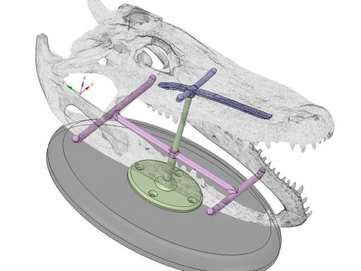 3D Scanning, Modeling & Printing of Alligator Skull Mount